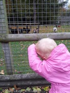 Goats at walton hall