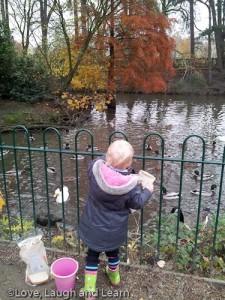 Ducks! Bruntwood park